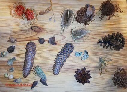 Material für Herbstmännchen