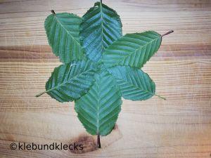 Blätter in der Mitte zusammen geklebt